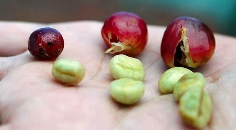 Peaberry vs. Regular Coffee Bean