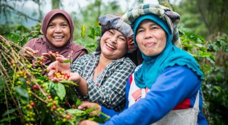 Umang Village, Bebesen sub district. Coffee farmers (members of Kopepi Ketiara Cooperative). Bu Husnaini in the plaid shirt, Bu Aini Ibrahim with blue scarf, and Rahmah with brown scarf