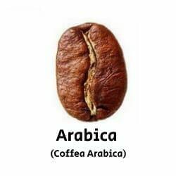 arabica (coffea arabica)
