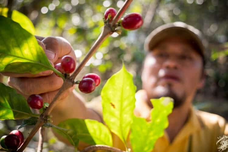 what does fair trade coffee mean